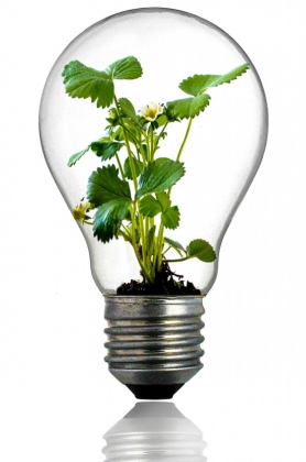 What a Bright Idea: Great Uses for Light bulbs